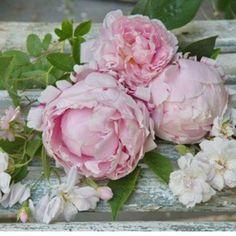 Fiori fiori fiori...