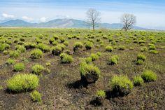 Burnt landscape near Bezverkhovo (Khasan district, Primorsky kray, Russia)