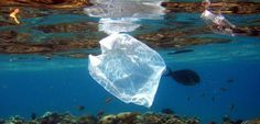 Müll: Forscher entdecken Plastik-fressende Bakterien - SPIEGEL ONLINE - Nachrichten - Wissenschaft