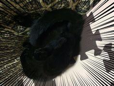 """""""遊び疲れて寝た・・・おやすみなさい。 #猫 #ネコ #ねこ #猫好きさんと繋がりたい #cat"""""""