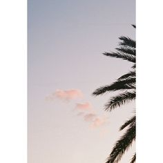 le chaos et le désordre ❤ liked on Polyvore featuring pictures, photo, pics, summer and backgrounds