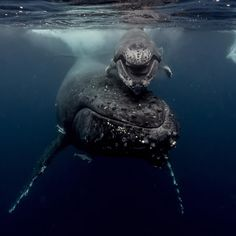 Michaela Skovranova · Neiafu, Tonga  ·  Yesterday a baby whale smiled at us and it was a 10/10 life moment