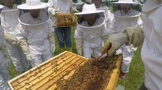 Kids Learn Why Bees Are Awesome