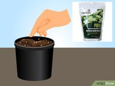 3 Ways to Grow Lavender from Seed - wikiHow Growing Lavender From Seed, How To Propagate Lavender, Seed Raising, Greenhouse Gardening, Yellow Flowers, Seeds, Pure Products, Plants, Patio