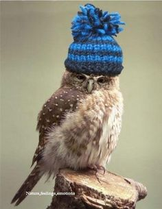 Hipster owl had no time for your grammar struggles. Owl Photos, Owl Pictures, Animals And Pets, Funny Animals, Cute Animals, Animal Antics, Animal Memes, Owl Meme, Funny Shit