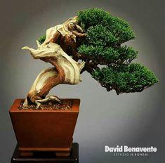 Juniper Bonsai, Mini Bonsai, Planter Pots, Gardening, Landscape, Style, Swag, Scenery, Lawn And Garden