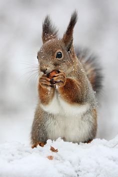 ecureuil-alors-jai-pris-un-cours-dinterpretation-a-luniversite-et-jai-fait/ - The world's most private search engine Animals And Pets, Baby Animals, Funny Animals, Cute Animals, Animals In Snow, Cute Squirrel, Squirrels, British Wildlife, Cat Dog
