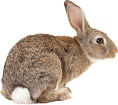 Rabbit PNG image image with transparent background Photoshop, Rabbit Png, Baby Animals, Cute Animals, Rabbit Pictures, Woodland Creatures, Animals Images, Fauna, Cute Bunny