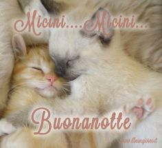 Buonanotte Good Night Sister, Good Morning Good Night, Day For Night, Animals Beautiful, Kitty, Humor, Funny, Pictures, Genere