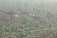 Kaziranga National Park Assam  http://wanderingpassport.com/?p=161