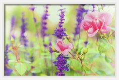 #AnnaMatveeva #FineArtPhotography #ArtForHome #FineArt #Pink #Rose #Nature #Flowers #GreetingCards #Photography