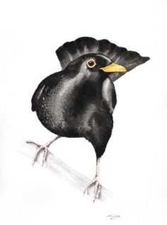 BLACKBIRD (Turdus merula)  bird, birds, animals, wildlife watercolour painting by Karolina Kijak