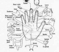 #hand #acupressure #reflexology chart  •  www.acupressurewellness.com
