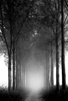 #nature #fog #tree #black white