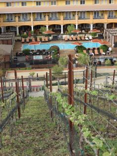 A Kid-Friendly Hotel in Napa Valley: The Meritage Resort and Spa