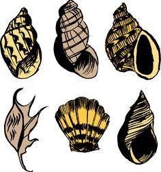 Seashell illustration