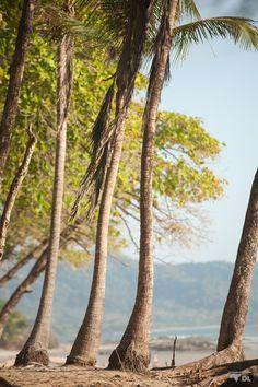 Pour les amoureux de la nature et des animaux, le Costa Rica est LE pays d'Amérique Central à ne pas manquer. Voici immanquables sympa à faire par région.