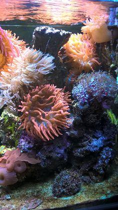 side my aquarium