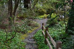 Linda Letters:: Lakewold Gardens, Part II