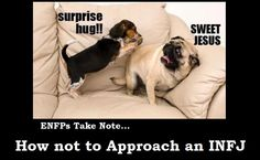 ENFP + INTJ + INFJ - LOL!  YEP!  I'd be the dog yelling 'sweet jesus!'