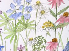 A nature watercolor illustration of wildflowers in a garden in shades of pink blue and purple make up this happy painting.