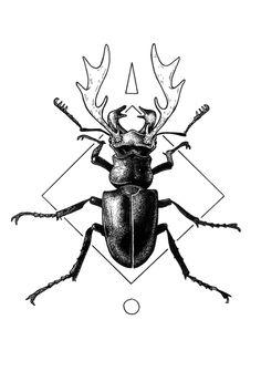 stag beetle web crop.jpg
