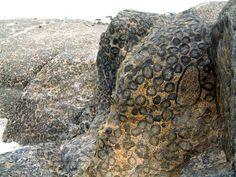 Orbicular granite, near the town of Caldera, northern Chile