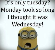 It'S only tuesday. it's only tuesday funny memes, hilarious jokes, humorous quotes, funny videos Friday Quotes Humor, Funny Good Morning Quotes, Dating Humor Quotes, Funny Mom Quotes, Smile Quotes, Humorous Quotes, Hair Quotes, Funny Life, Morning Humor