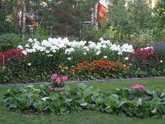 Eilan elämää: Siskoni Maijan puutarha