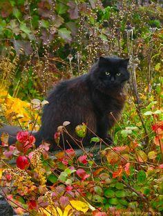 Doctor-Woo-In-the-October-Garden-Her-Favorite-Domain-ⓒ-michaela-medina-thegardenerseden