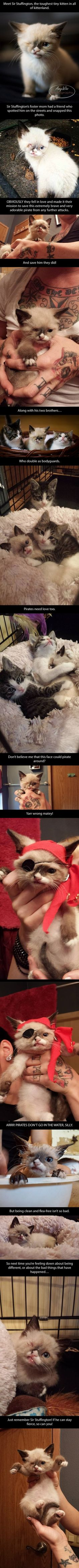 Sir Stuffington, the pirate kitty