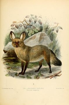 By Mivart, St. George Jackson, 1827-1900  Publication info LondonR.H. Porter1890 Contributing Library: Gerstein - University of Toronto BioDiv Library