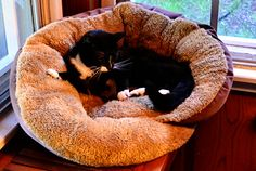 Help your new kitten feel like part of the family faster by putting one pet bed in a place where you hang out, such as near the television. Provide him a second bed in a quiet place, if he'd like to get away from the hustle and bustle of the family. This super soft bed compares at $39.99 but sells for just $19.99 at #TuesdayMorning!