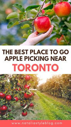 If you live near Toronto you'll want to save this for next fall! Apple picking is such a fun fall activity and this guide features my favourite place to go apple picking near Toronto Toronto Vacation, Toronto Hotels, Toronto Travel, Usa Travel Guide, Travel Usa, Travel Tips, North America Destinations, Top Travel Destinations, Ontario Travel