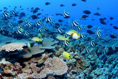 For almost 2000km long, Great Barrier Reef is the world's largest coral reef eco…