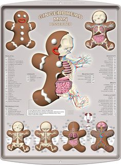 """Gingerbread Man Dissected"" by Jason Freeny"