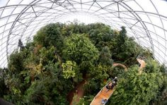 Visitors climb up stairs on the newly opened treetop path in the Masoala Rainforest hall at the zoo ... - REUTERS/Arnd Wiegmann