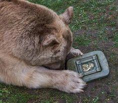 Orthodox Christianity, Orthodox Icons, Kangaroo, Spirituality, Bear, Feelings, Cats, Animales, Faith