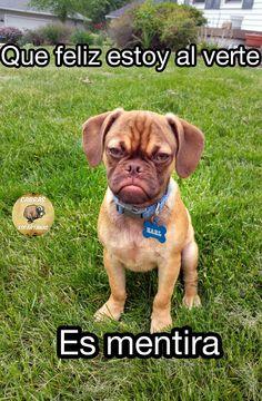 Earl, el perro, está muy feliz