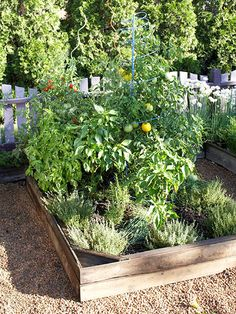 """Grow a Pizza Garden! To see what plants are in the garden and a planting grid click on the """"next"""" photos."""