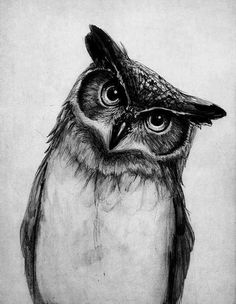 Owl sketch. #art