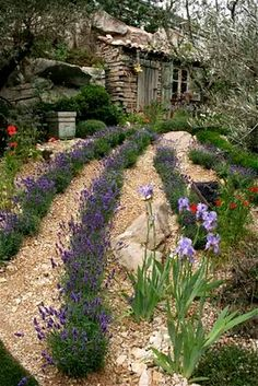 rustic Garden Design featuring rows of lavender. I have two or three lavender plants but would mind having more. Once these Spring storms pass through I'll head to the store. Herb Garden, Garden Paths, Garden Landscaping, Garden Edging, Modern Garden Design, Landscape Design, Rustic Gardens, Outdoor Gardens, Garden Care