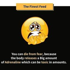 You can die from fear, because the body releases big amount aswrnaline which can be toxic in amounts. Random Science Facts, Canning, Big, Home Canning, Conservation