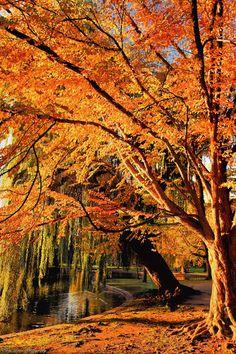 """Catch the sun,"" Boston, MA.  Photo:  *MyLifeThroughTheLens on deviantART"