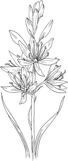 Hosta Flowers ~ Hosta 'Aphrodite'✖️More Pins Like This One At FOSTERGINGER @ Pinterest✖️
