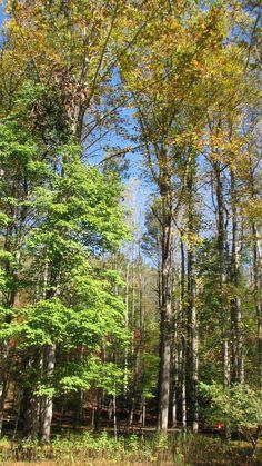 October Trees!
