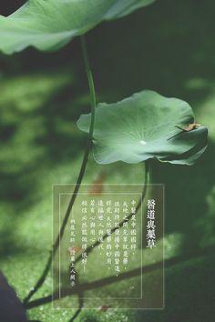 醫道與藥草   中醫是中國國粹,  天地之間見草就是藥,  很期待能發揚中國醫道,  探究天然醫藥的妙用,  造福世人與後代。  若有心與用心,  相信必然能做得很好!