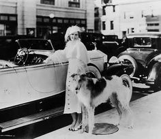 Jean Harlow getting ready for a drive with a dog as large as her convertible