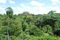 Amazon Rainforest, South America (via @Brunildacnt214 )