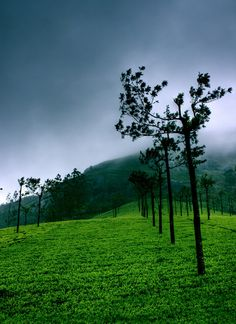 Tea Plantation in Kerala, India. The highest tea estates in India are seen in and around Munnar which is in the hill ranges of the Western Ghats in Kerala. The British settlers during the colonial times introduced the tea plantations and cultivation in Kerala. The hilly region's climate and soil conditions are perfect for cultivating tea. Today, India is the world's largest tea producer and exporter.
